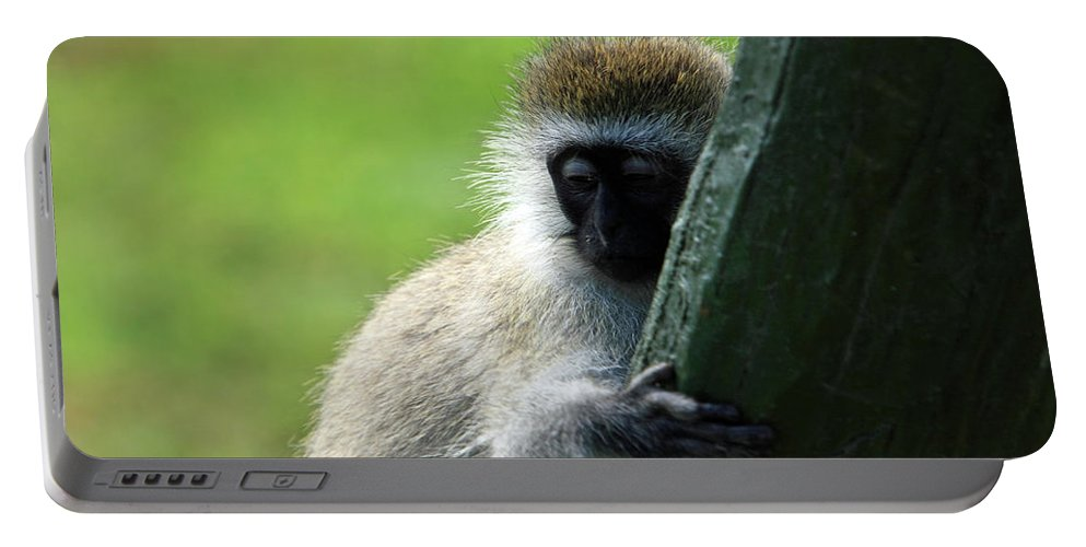 Ape Portable Battery Charger featuring the photograph Vervet Monkey by Aidan Moran