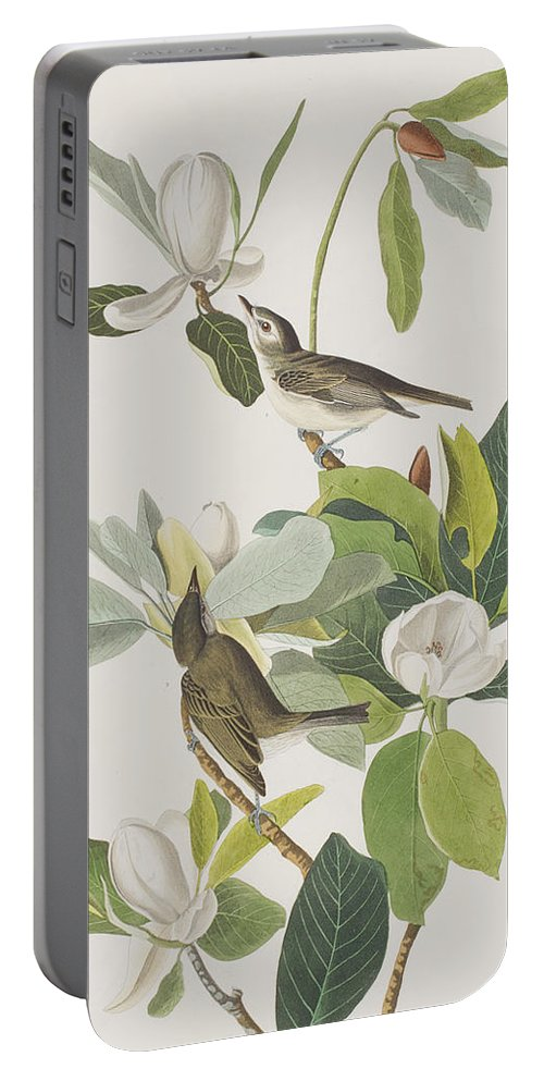 Warbling Flycatcher Portable Battery Charger featuring the painting Warbling Flycatcher by John James Audubon