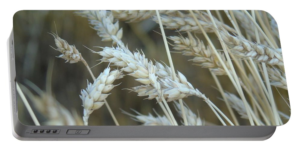 Wheat Portable Battery Charger featuring the photograph Wheats by Yohana Negusse