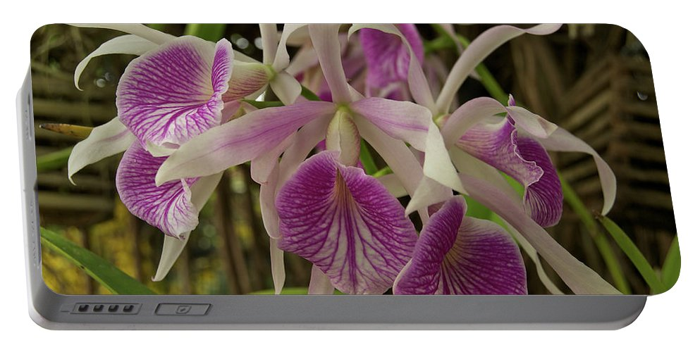Orchids Portable Battery Charger featuring the photograph White And Purple Orchids by Michael Peychich