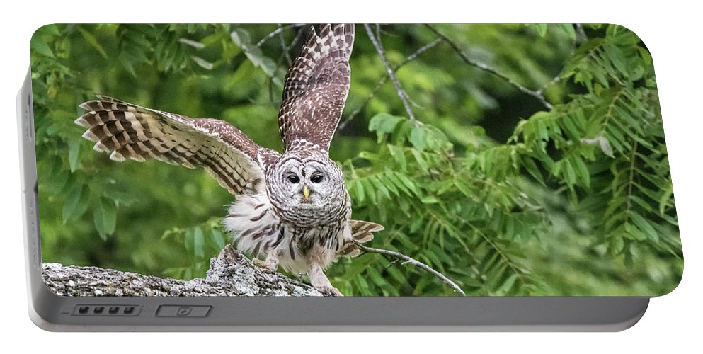 Barred Owl Portable Battery Charger featuring the photograph Whooo Goes There by Linda Shannon Morgan