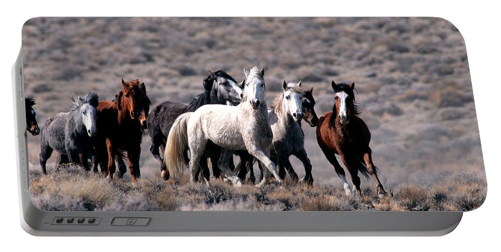 Horses Portable Battery Charger featuring the photograph Wild Horses by Inga Spence