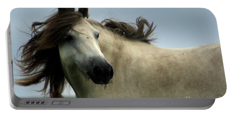 Horse Portable Battery Charger featuring the photograph Wind In The Mane by Angel Ciesniarska