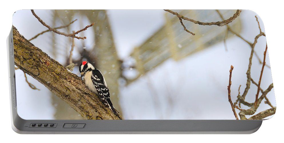 Windmill Portable Battery Charger featuring the photograph Woodpecker And Windmill by David Arment