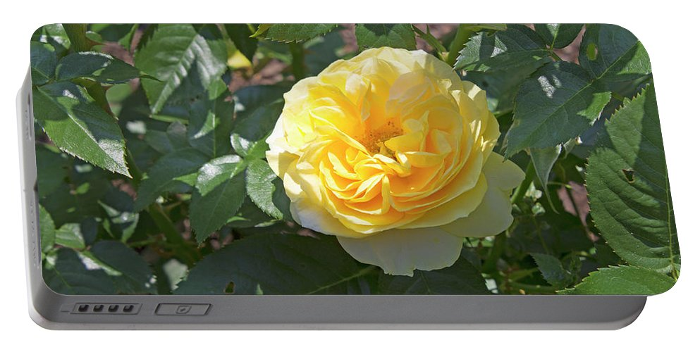Rose Portable Battery Charger featuring the photograph Yellow Rose by LaMont Johnson