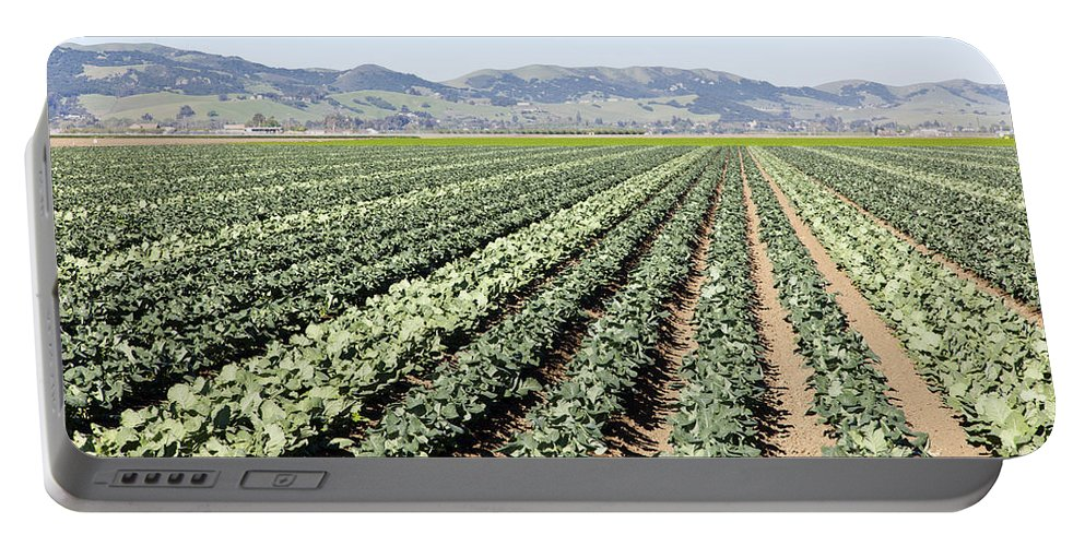 Broccoli Field Portable Battery Charger featuring the photograph Young Broccoli Field For Seed Production by Inga Spence