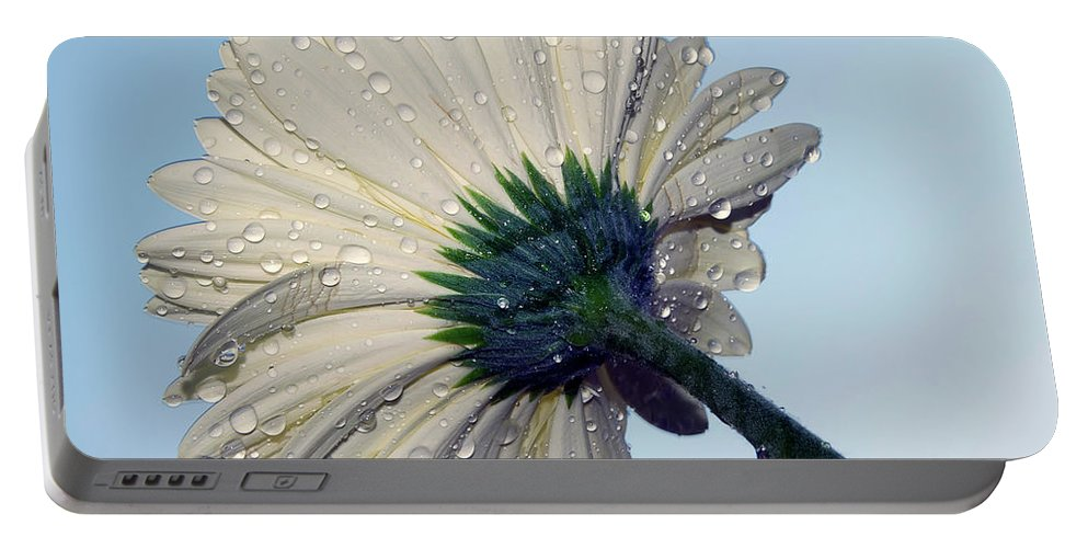 Flowers Portable Battery Charger featuring the photograph White Gazania by Elvira Ladocki