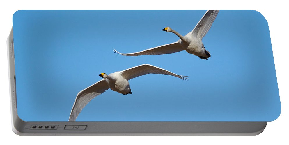 Jouko Lehto Portable Battery Charger featuring the photograph Whooper Swans by Jouko Lehto