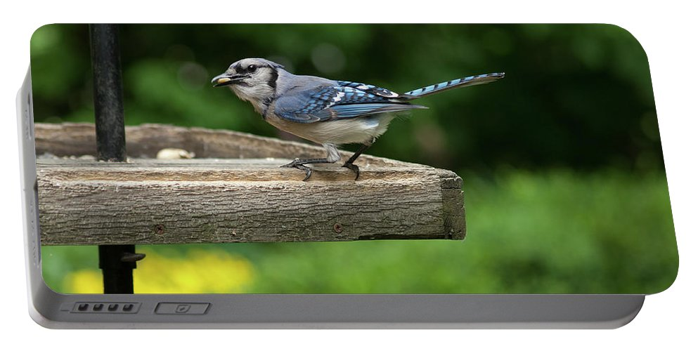 Bluejay Portable Battery Charger featuring the photograph Bluejay by Diane Schuler