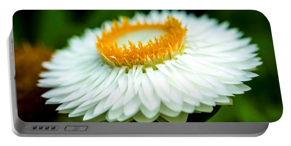 Branch Portable Battery Charger featuring the photograph Flower Blossom by Jijo George