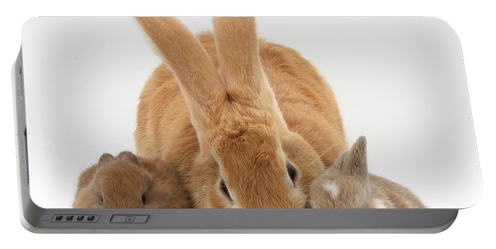 Nature Portable Battery Charger featuring the photograph Rabbits by Mark Taylor