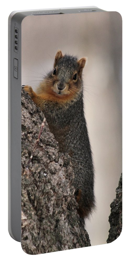 Squirrel Portable Battery Charger featuring the photograph Squirrel by Lori Tordsen