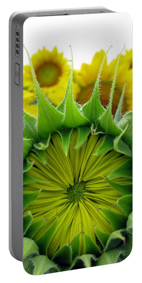 Sunflwoers Portable Battery Charger featuring the photograph Sunflower Series by Amanda Barcon