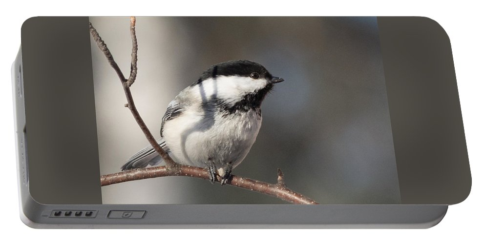 Chickadee Portable Battery Charger featuring the photograph Black Capped Chickadee by Dee Carpenter