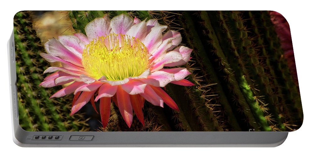 Cactus Portable Battery Charger featuring the photograph Pink Cactus Flower by Jim And Emily Bush