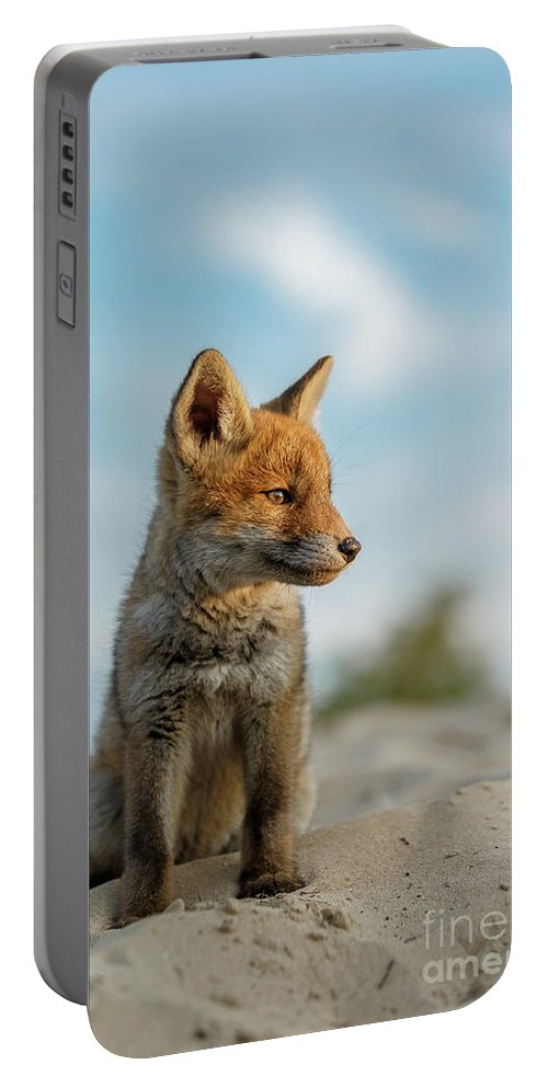Alert Portable Battery Charger featuring the photograph Red Fox Cub by Menno Schaefer