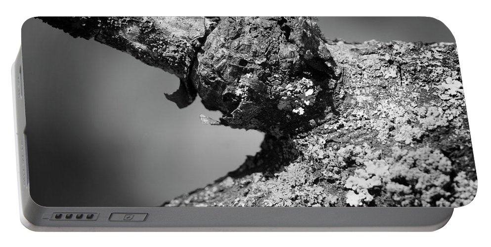 Lichen Portable Battery Charger featuring the photograph Bare Tree Branches In Early Spring by Donald Erickson