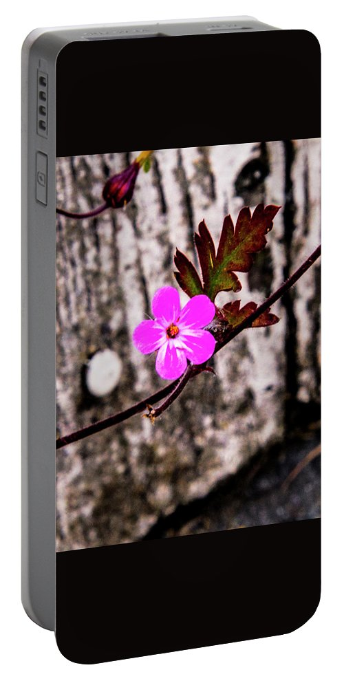 Portable Battery Charger featuring the photograph Summer Rams by Angus Hooper Iii