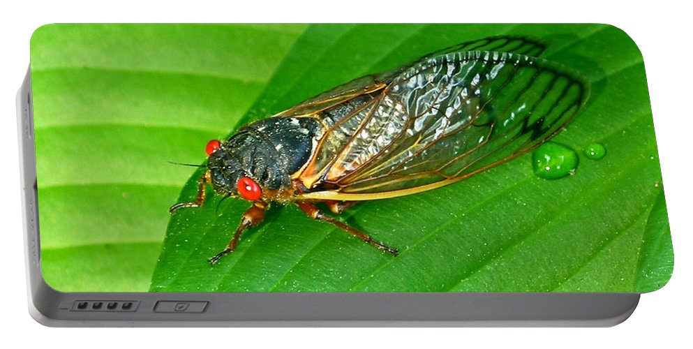 17 Portable Battery Charger featuring the photograph 17 Year Periodical Cicada by Douglas Barnett