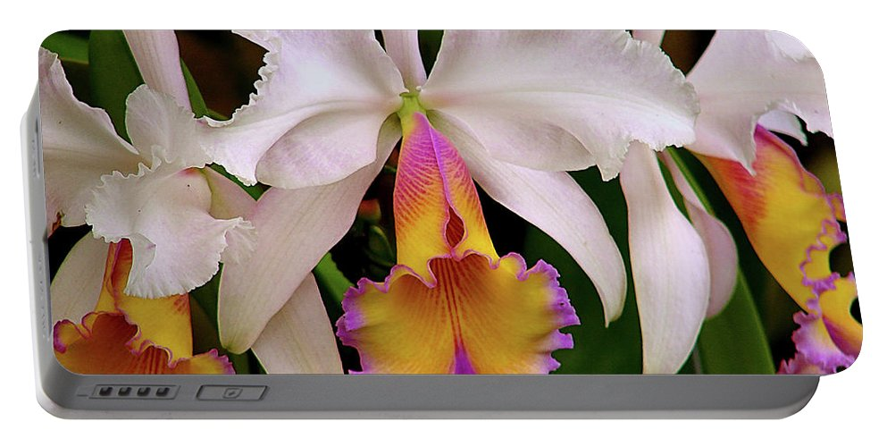 Flowers Portable Battery Charger featuring the photograph 180 Degrees by Blair Wainman