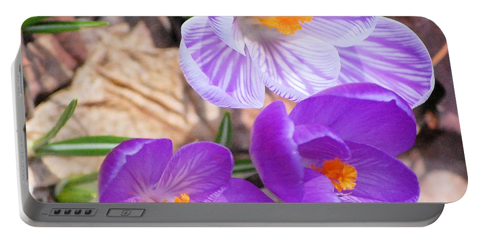Digital Photography Portable Battery Charger featuring the photograph 1st Flower In Garden 2010 Photo by David Lane