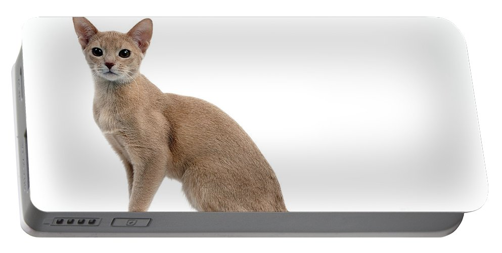 Cat Portable Battery Charger featuring the photograph Abyssinian Kitten by Jean-Michel Labat