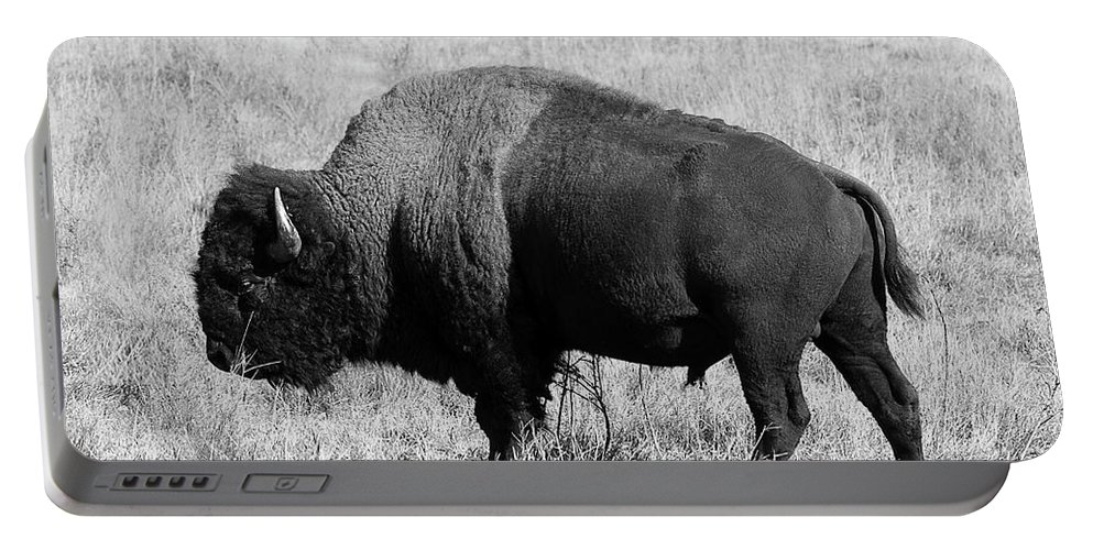 North Dakota Portable Battery Charger featuring the photograph American Bison Buffalo Bull Feeding On Dry Fall Grass by Donald Erickson