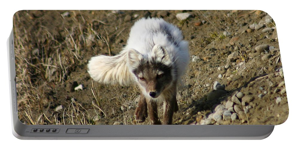 Arctic Fox Portable Battery Charger featuring the photograph Arctic Fox by Anthony Jones