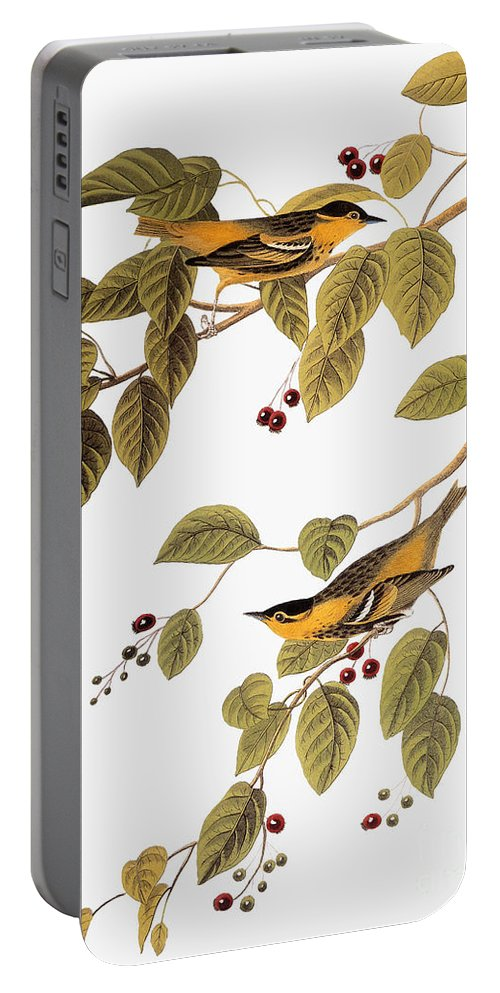 1838 Portable Battery Charger featuring the photograph Audubon: Warbler by Granger