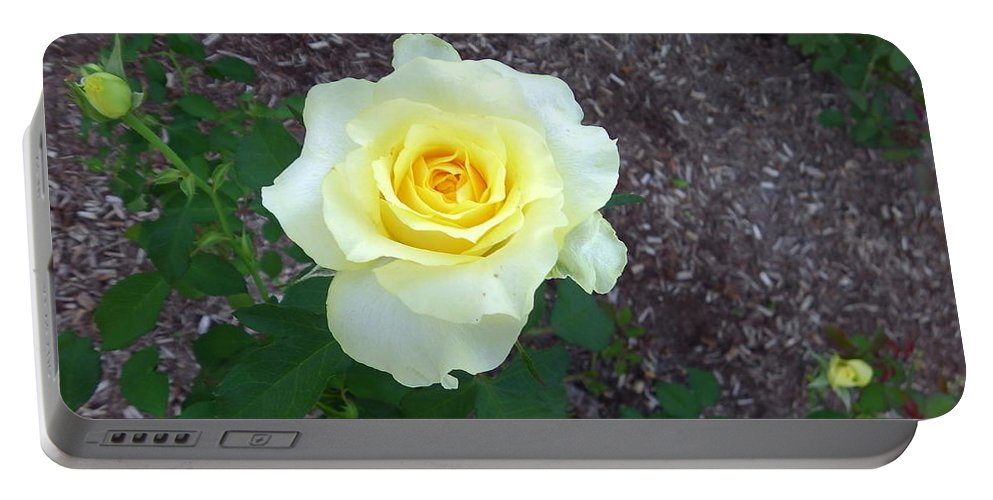 Australia Portable Battery Charger featuring the photograph Australia - Yellow Rose Flower by Jeffrey Shaw