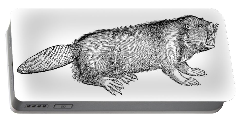 1607 Portable Battery Charger featuring the photograph Beaver by Granger