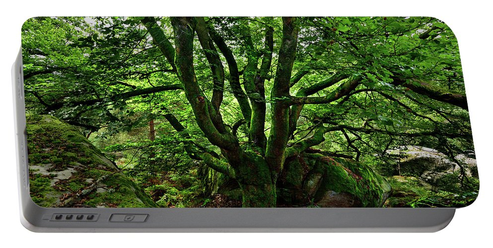 Nature Portable Battery Charger featuring the photograph Beech Tree by Olivier Blaise