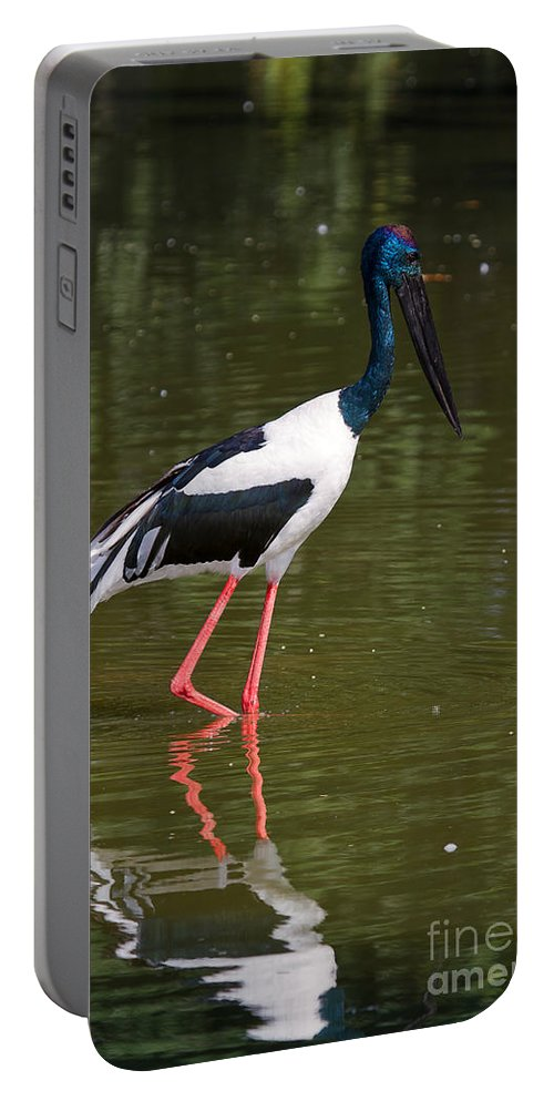 Bird Portable Battery Charger featuring the photograph Black-necked Stork by Louise Heusinkveld