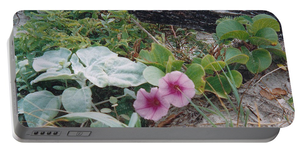 Morning Glory Flowers Beach Plants Sand Portable Battery Charger featuring the photograph 2 Blooms by Cindy New