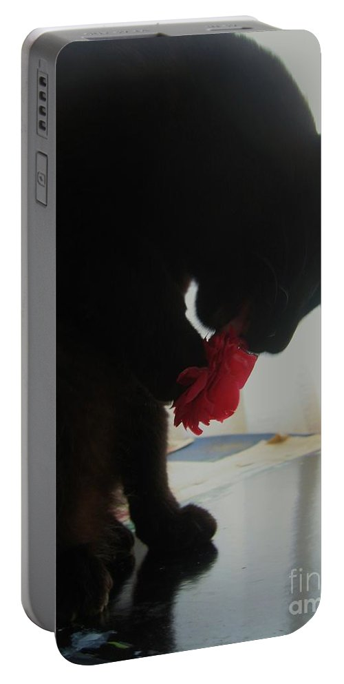 Photograph Cat Black Red Flower Camellia Portable Battery Charger featuring the photograph Cat Eating Camellia by Seon-Jeong Kim