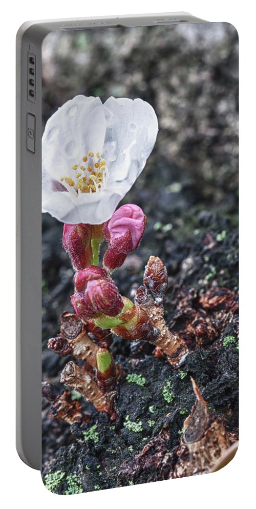 Cherry Blossom Portable Battery Charger featuring the photograph Cherry Blossom by Sebastian Musial