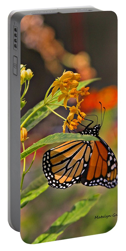 Portable Battery Charger featuring the photograph Clinging Butterfly by Matalyn Gardner