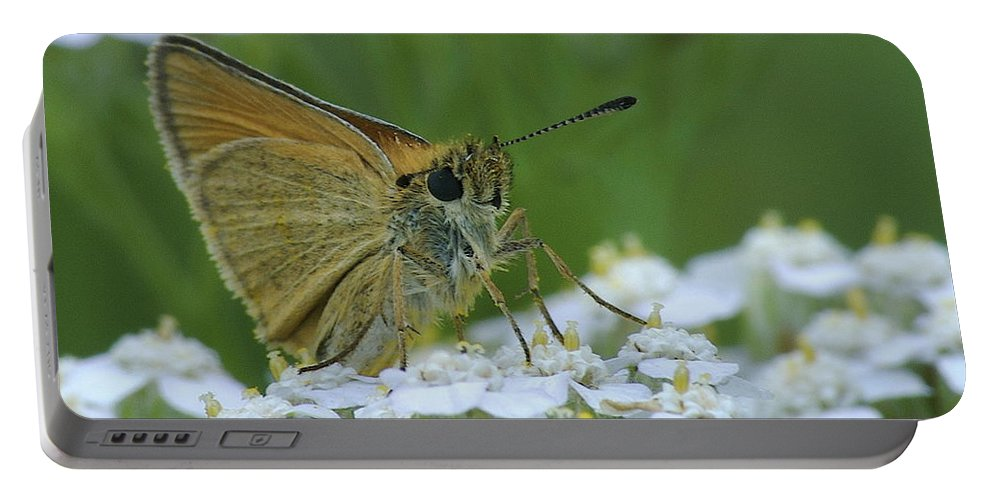 White Flowers Portable Battery Charger featuring the photograph Dion Skipper Yarrow Blossoms by Michael Peychich