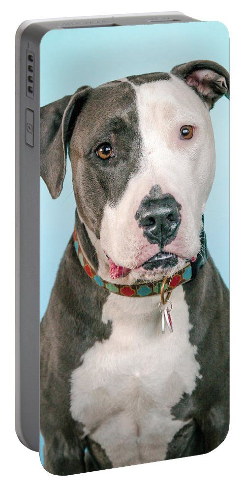 Dog Portable Battery Charger featuring the photograph Cara by Pit Bull Headshots by Headshots Melrose