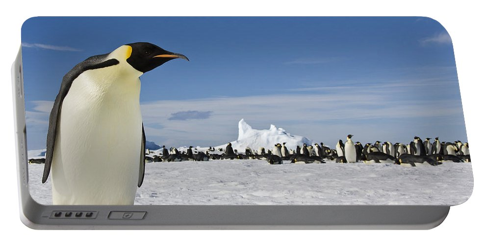 Emperor Penguin Portable Battery Charger featuring the photograph Emperor Penguin by Jean-Louis Klein & Marie-Luce Hubert