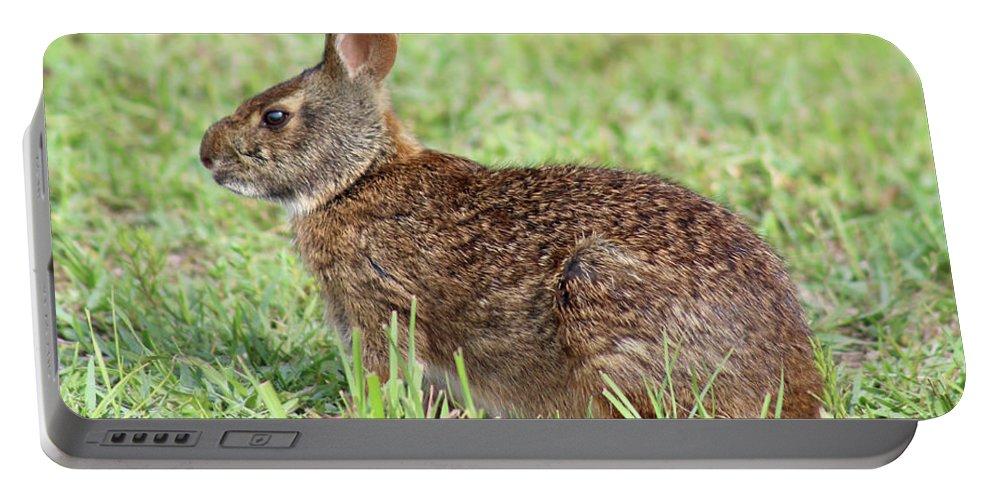 Florida Marsh Rabbit Portable Battery Charger featuring the photograph Florida Marsh Rabbit by Kerry Fischel