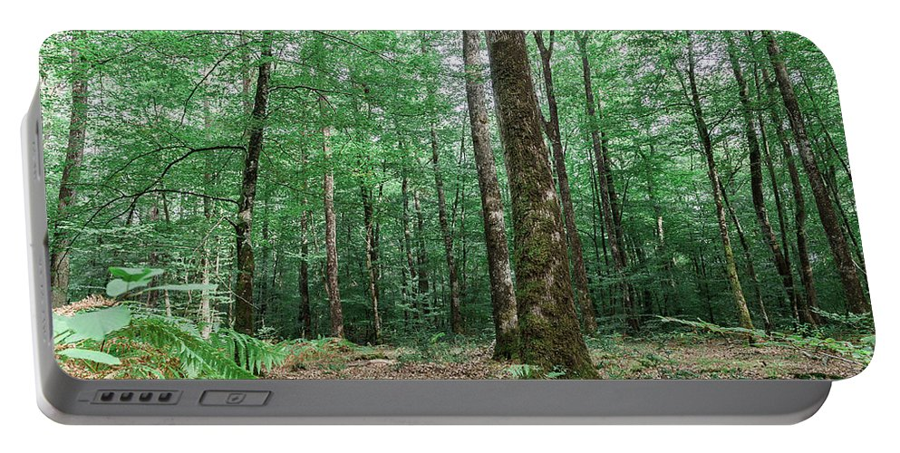Forest Portable Battery Charger featuring the photograph Forest by Luis Ganilho