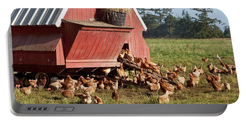 Chickens Portable Battery Charger featuring the photograph Free Range Chickens by Inga Spence