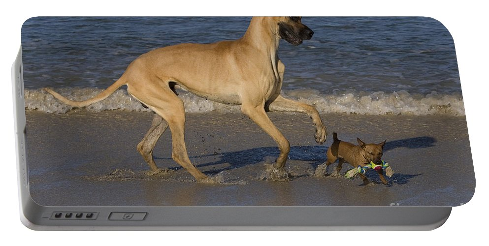 Great Dane Portable Battery Charger featuring the photograph Giant And Tiny Dogs by Jean-Louis Klein & Marie-Luce Hubert