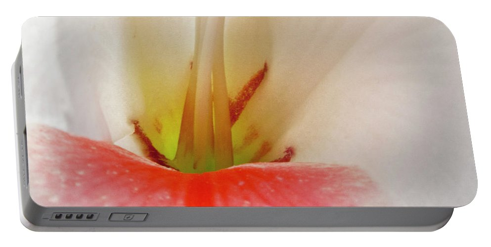Gladiolus Portable Battery Charger featuring the photograph Gladiolus by Heiko Koehrer-Wagner