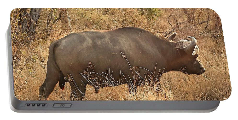 Buffalo Portable Battery Charger featuring the photograph Going For A Walk by Lisa Byrne
