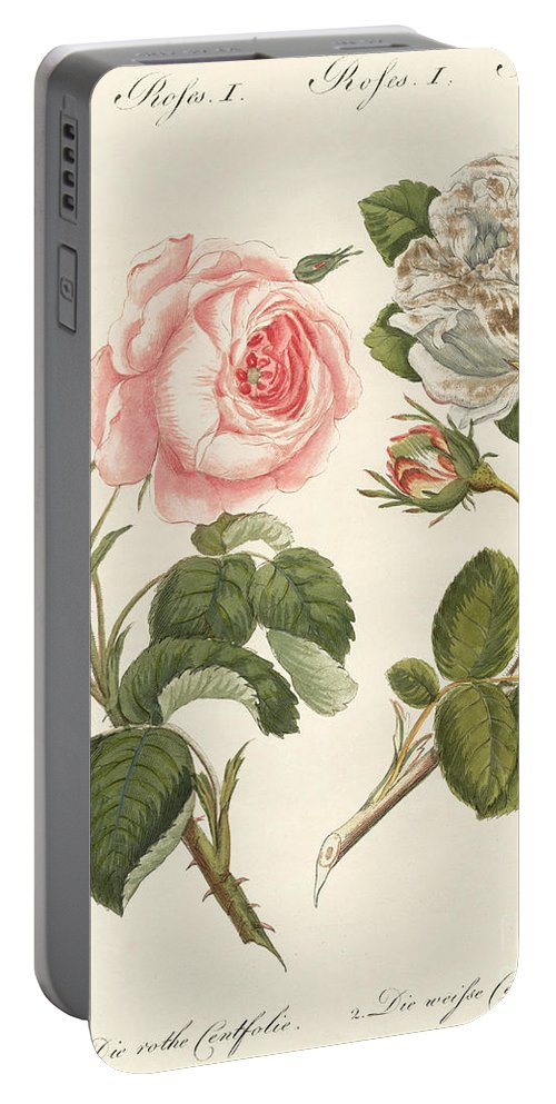 Provence Rose Portable Battery Charger featuring the drawing Kinds Of Roses by German School