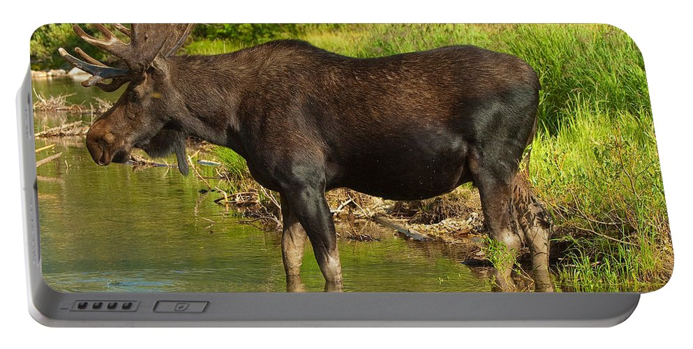 Bull Moose Portable Battery Charger featuring the photograph Moose by Sebastian Musial