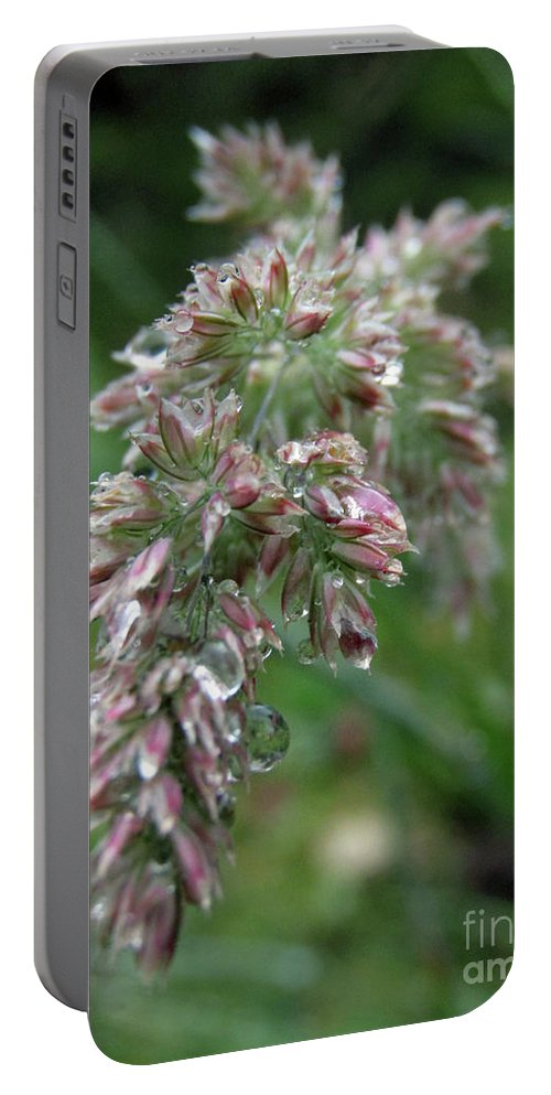 Ryegrass Portable Battery Charger featuring the photograph Morning Dewdrops by Kim Tran