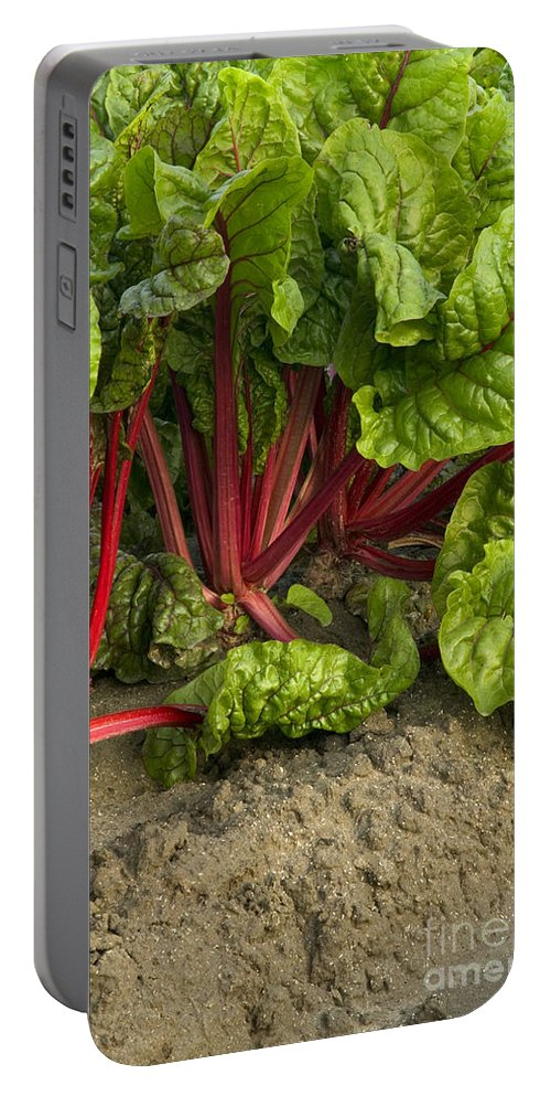 Swiss Chard Portable Battery Charger featuring the photograph Organic Swiss Chard by Inga Spence
